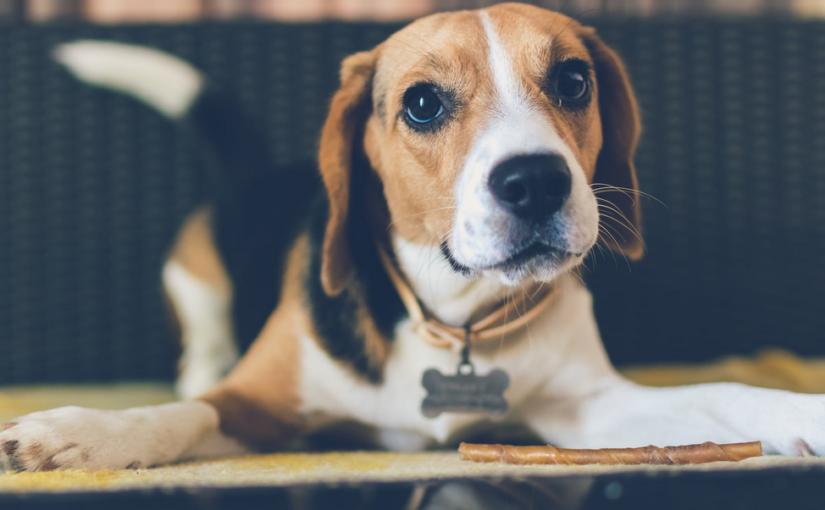 Ist Bio auch bei Hundefutter sinnvoll?
