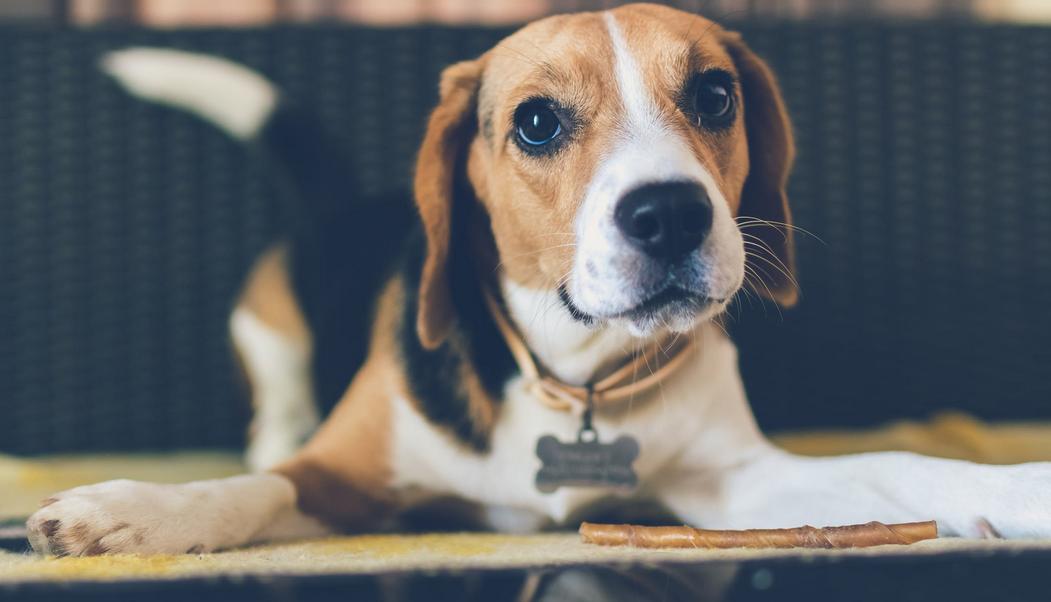 Hundefutter sensitiv